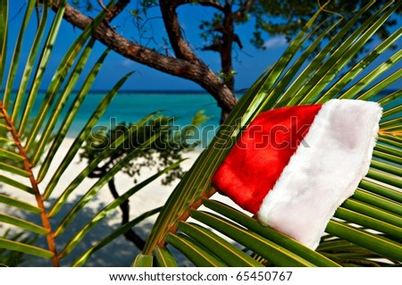 Christmas hat hang on a branch of palm tree - stock photo