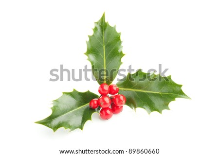 Christmas Holly (Ilex) with red berries, isolated on white. - stock photo
