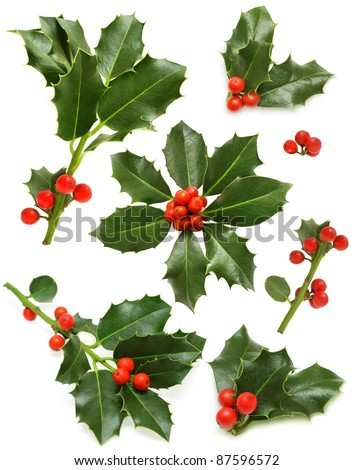 Christmas holly set - green leaf, red berry and twig - stock photo