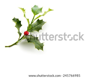 Christmas Holly, with bright red berrie in side left - stock photo