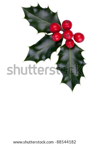 Christmas holly with red berries in the corner isolated on white - stock photo
