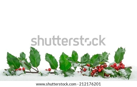Christmas holly with snow with copy space on a white background - stock photo