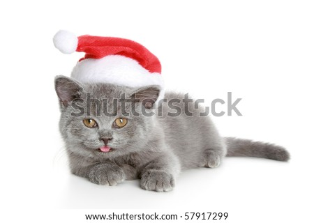 Christmas kitten in a red, New Year's hat. Isolated on a white background - stock photo