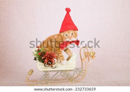 Christmas kitten wearing Santa cap hat sitting inside decorated Christmas sleigh on light pink background  - stock photo