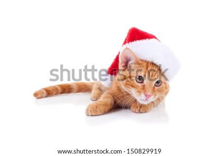 Christmas kitten wearing santa hat - cat - stock photo