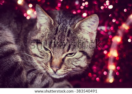 Christmas kitten with red christmas light decoration - stock photo