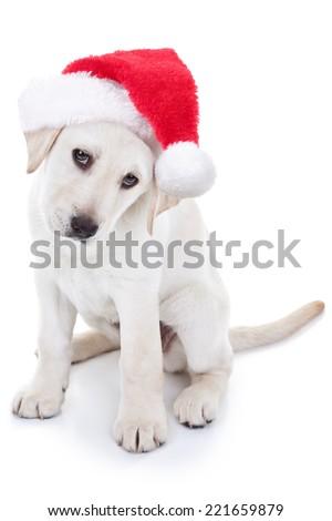 Christmas Labrador puppy dog wearing Santa hat - stock photo