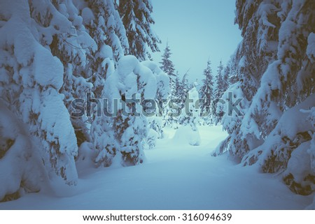 Christmas landscape. Fairytale forest with snow drifts. Beauty in nature. Color toning. Low contrast - stock photo