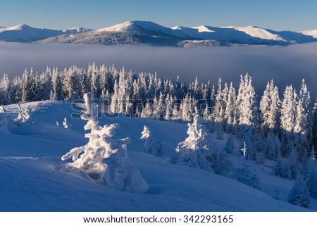 Christmas landscape. Fir forest in mountains. Sunny morning. Carpathians, Ukraine, Europe - stock photo