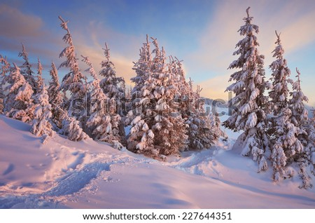 Christmas landscape. Path in winter forest - stock photo