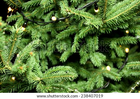 Christmas lights hanging in a tree,  christmas tree branch  - stock photo