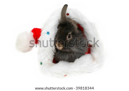 christmas lion rabbit