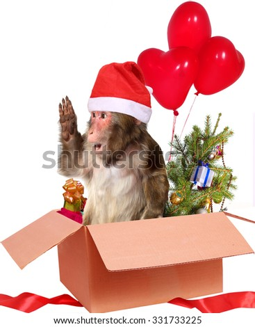 christmas monkey Santa Claus  in a cardboard box with gifts - stock photo