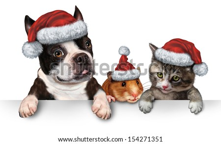 Christmas Pet sign for veterinary medicine and pet store or animal adoption winter holiday advertising as a cute dog hamster and a cat with a santa hat hanging on a horizontal white placard. - stock photo