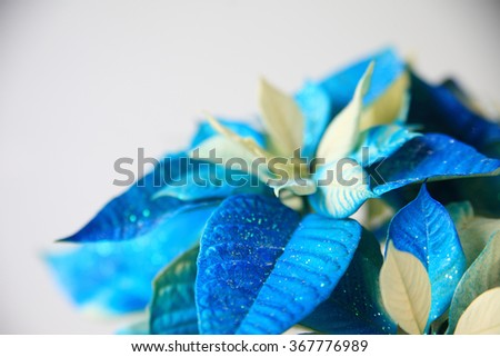 Christmas plant dyed blue and sprinkled with glitter - stock photo