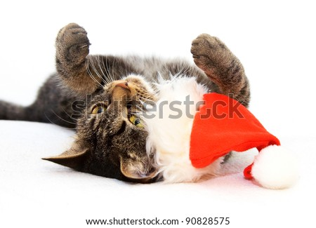 Christmas playful cat lying on the back with red Santa Claus cap near by - stock photo