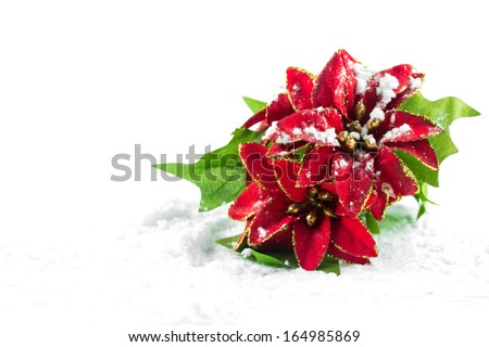 Christmas poinsettia with snow - stock photo