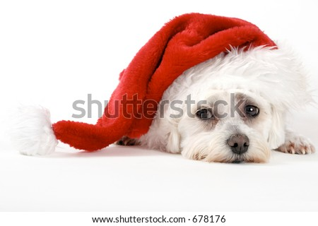 Christmas pooch resting with a santa hat - stock photo