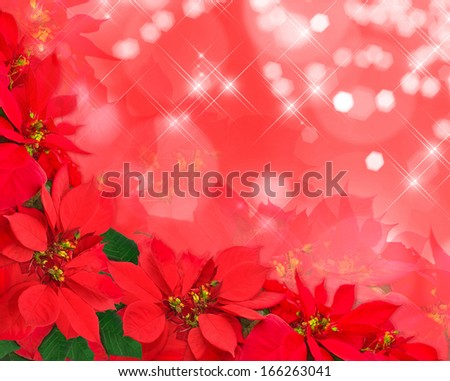 christmas postcard from poinsettias isolated on white