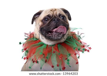 Christmas Pug - stock photo