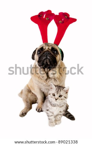 Christmas Pug dog wearing antler and British Shorthair kitten with Christmas ornaments.