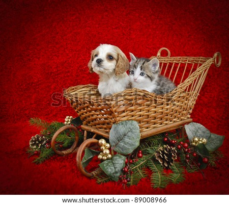 Christmas puppy and kitten sitting in a sled with copy space on a red background. - stock photo