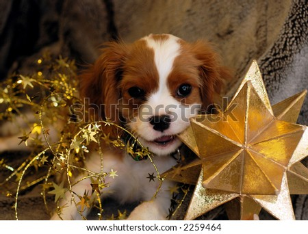 Christmas Puppy chewing on a star - stock photo