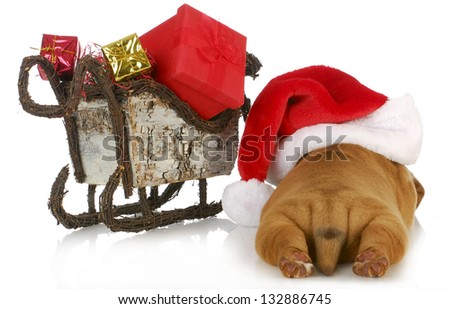 christmas puppy - dogue de bordeaux puppy wearing santa hat laying beside sleigh full of presents  isolated on white background - stock photo