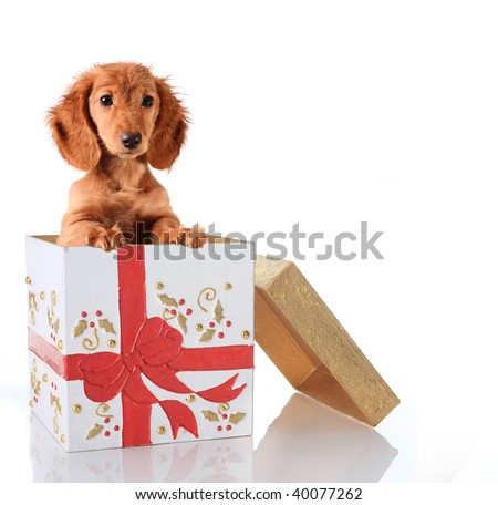 Christmas puppy in a gift box. - stock photo