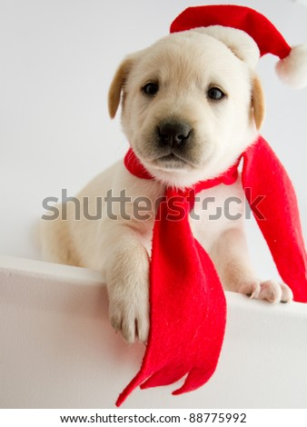 Christmas puppy in a Santa hat - stock photo