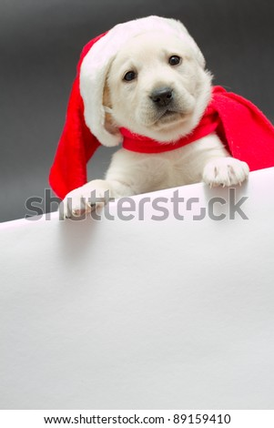 Christmas puppy in a Santa hat with empty border - space for text - stock photo