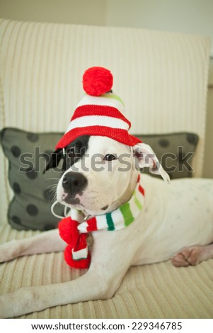Christmas puppy wears hat and scarf - stock photo