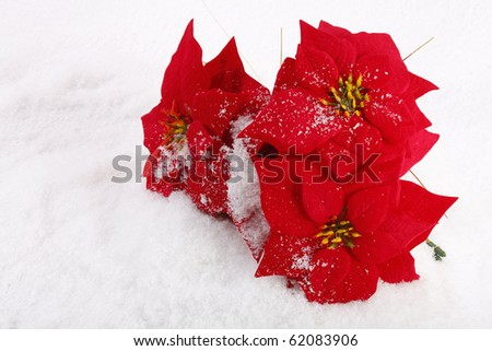 Christmas red poinsettias background over snowflake background - stock photo