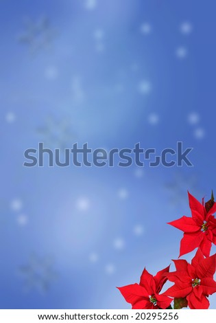 Christmas red poinsettias over blue snowflake background - stock photo