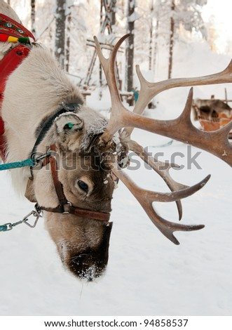 Christmas Reindeer on the background of a winter forest - stock photo
