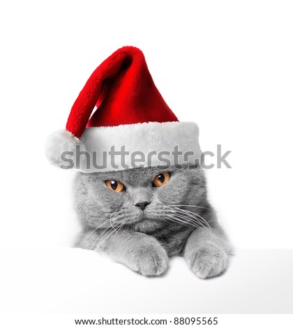 Christmas Santa cat - stock photo