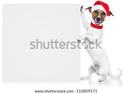 christmas santa dog placeholder - stock photo