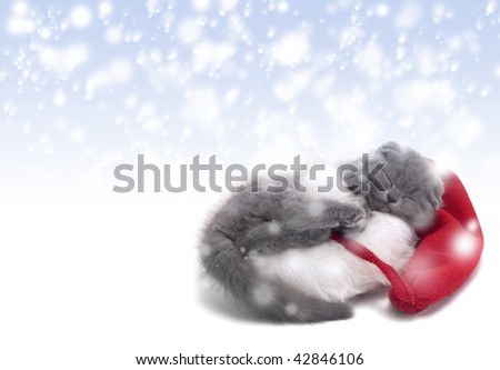 christmas scottish fold kitty laying in Santa hat with snow background - stock photo