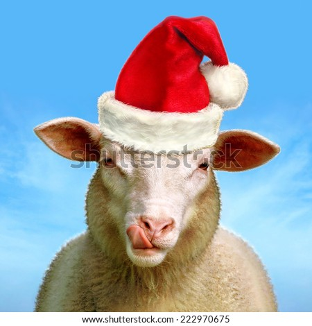 Christmas sheep - Digital image processing from photo. - stock photo