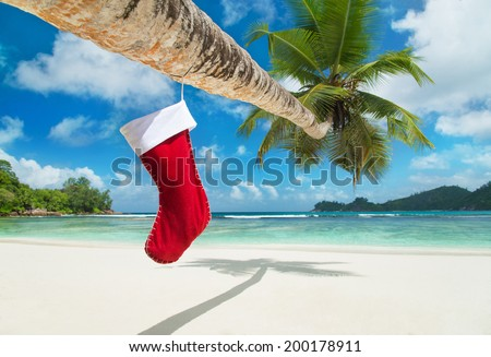 Christmas sock on palm tree at exotic tropical beach. Holiday concept for New Years Cards. - stock photo