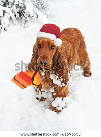 Christmas Spaniel in Snow bearing Gifts