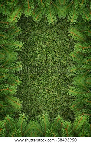 Christmas spruce  texture. Shot in a studio
