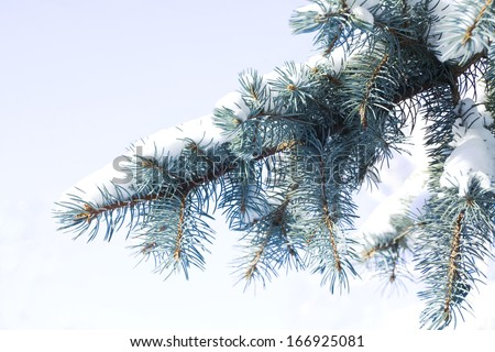 christmas spruce tree with fresh snow  - stock photo