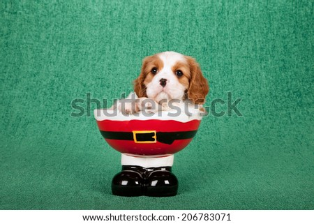 Christmas theme Cavalier puppy sitting in Santa pants and boots shaped bowl on green background  - stock photo
