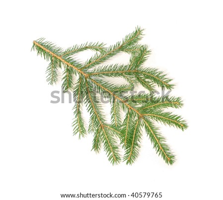 Christmas tree branch - stock photo