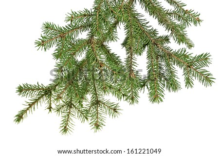 Christmas tree branch on a white background isolated - stock photo