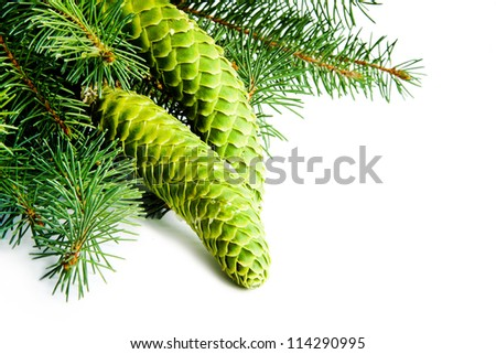 Christmas tree branches and cones - stock photo
