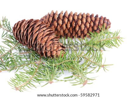 Christmas tree branches and cones on white - stock photo