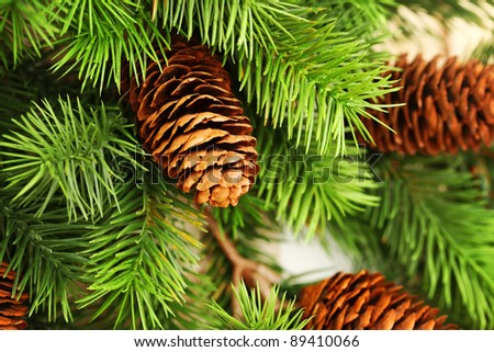 Christmas tree branches background - stock photo