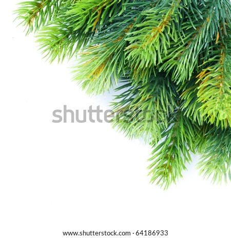 Christmas tree branches border over white - stock photo
